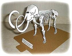 mammutskelett.jpg