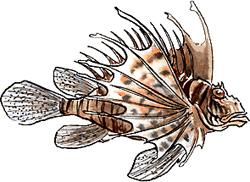 giftiga fiskar i sverige